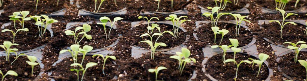 Using AI to maximize crop yields